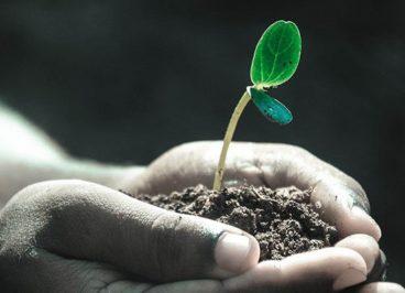Das kleine Pflänzchen Hoffnung in herausfordernden Zeiten - Antje Heimsoeth
